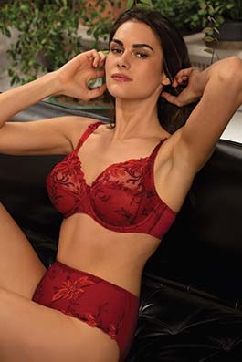 Aster Aphrodite rouge aphrodite